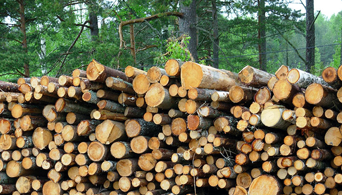 woodpile-3-1229344